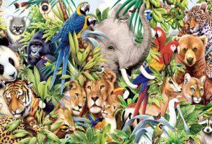 vadon élő állatok grafika